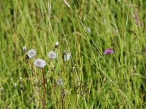 21 Blumenwiese